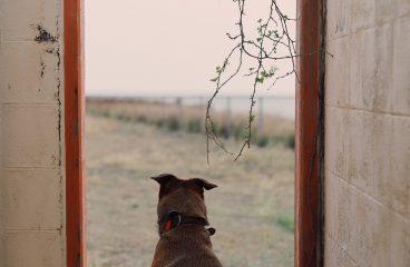 Dlaczego pies jest najlepszym przyjacielem i członkiem rodziny?